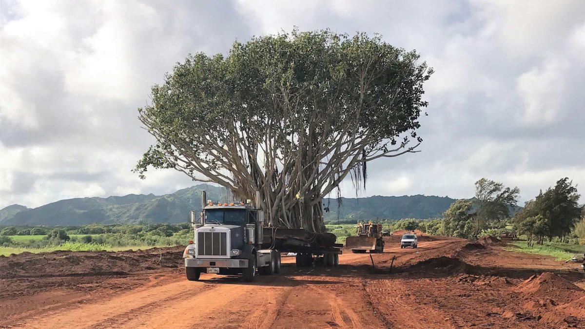 Moving the Bayan Tree